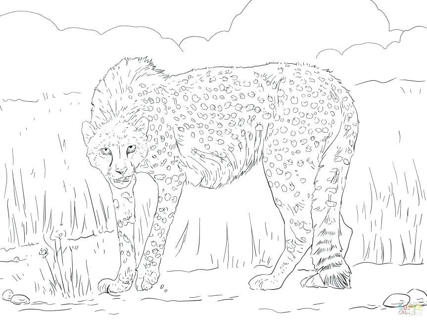863x647 Cheetah Coloring Pages Cheetah Color Page Real Cheetah Coloring
