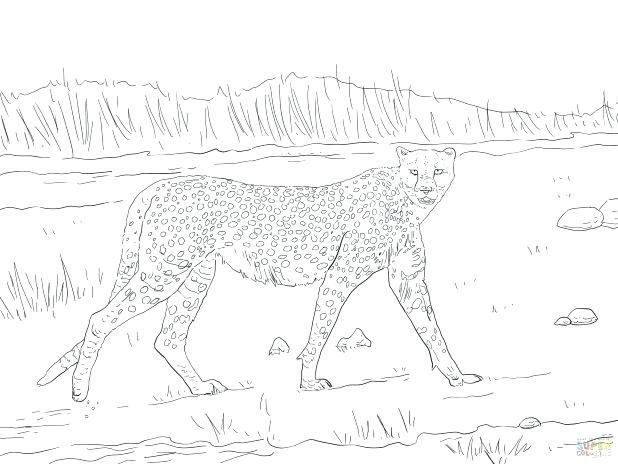 618x464 Cheetah Coloring Pages Cheetah Coloring Page Running Cheetah