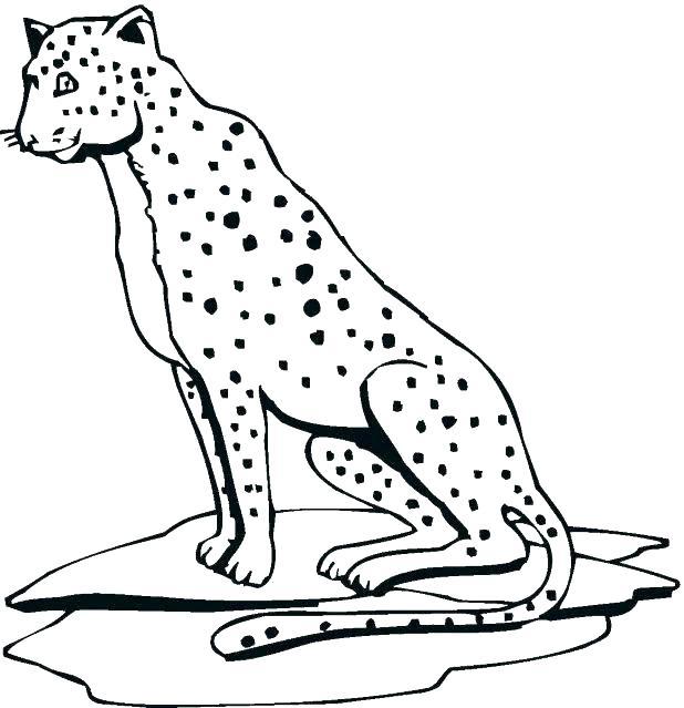 618x639 Cheetah Coloring Pages Cheetah Coloring Pages Cheetah Coloring