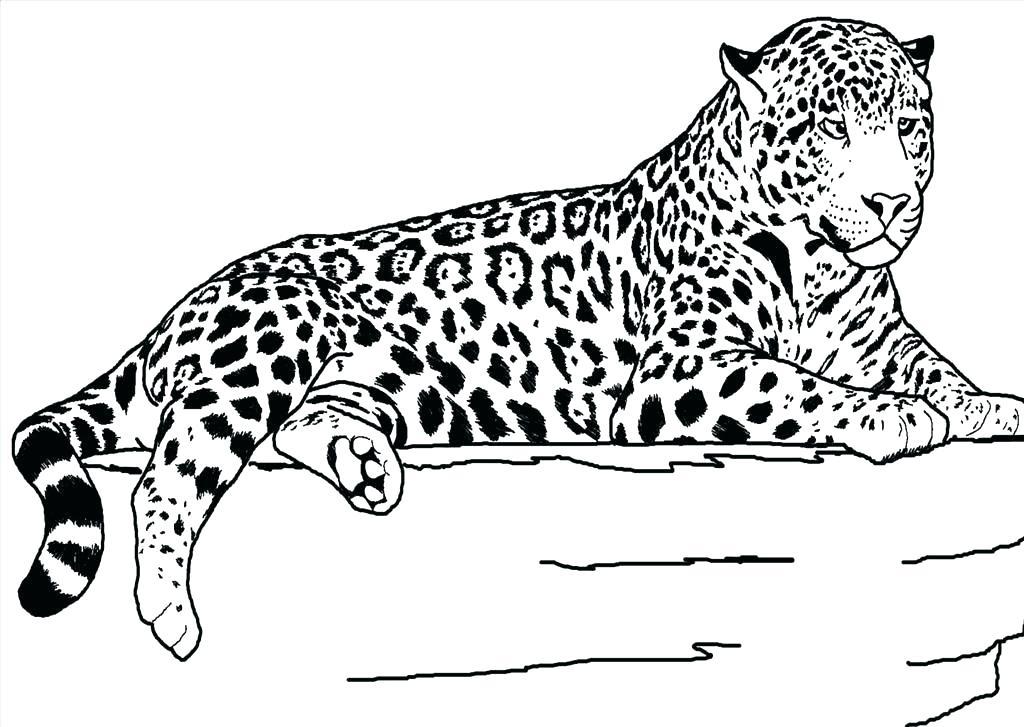 1024x727 Cheetah Coloring Pages Cheetah Coloring Pages For Kids Minecraft