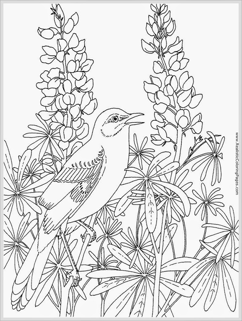 790x1046 Incredible Robin Bird Coloring Pages For Adult Realistic Trend
