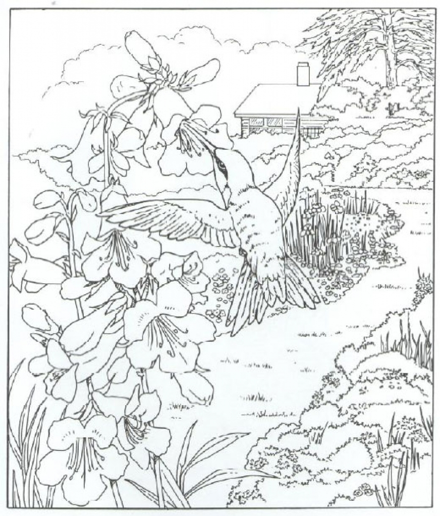 872x1024 Very Detailed Realistic Hummingbird Coloring Page For Adults Free