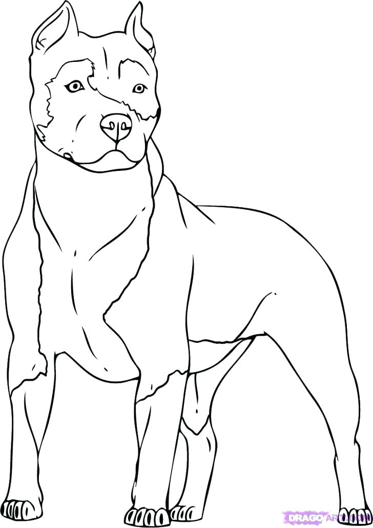 728x1032 Realistic Dog Coloring Pages Dogs Pictures To Color Dog Color