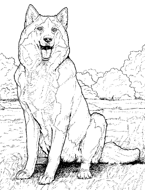 550x720 Realistic Dog Coloring Pages Realistic Dog Coloring Pages