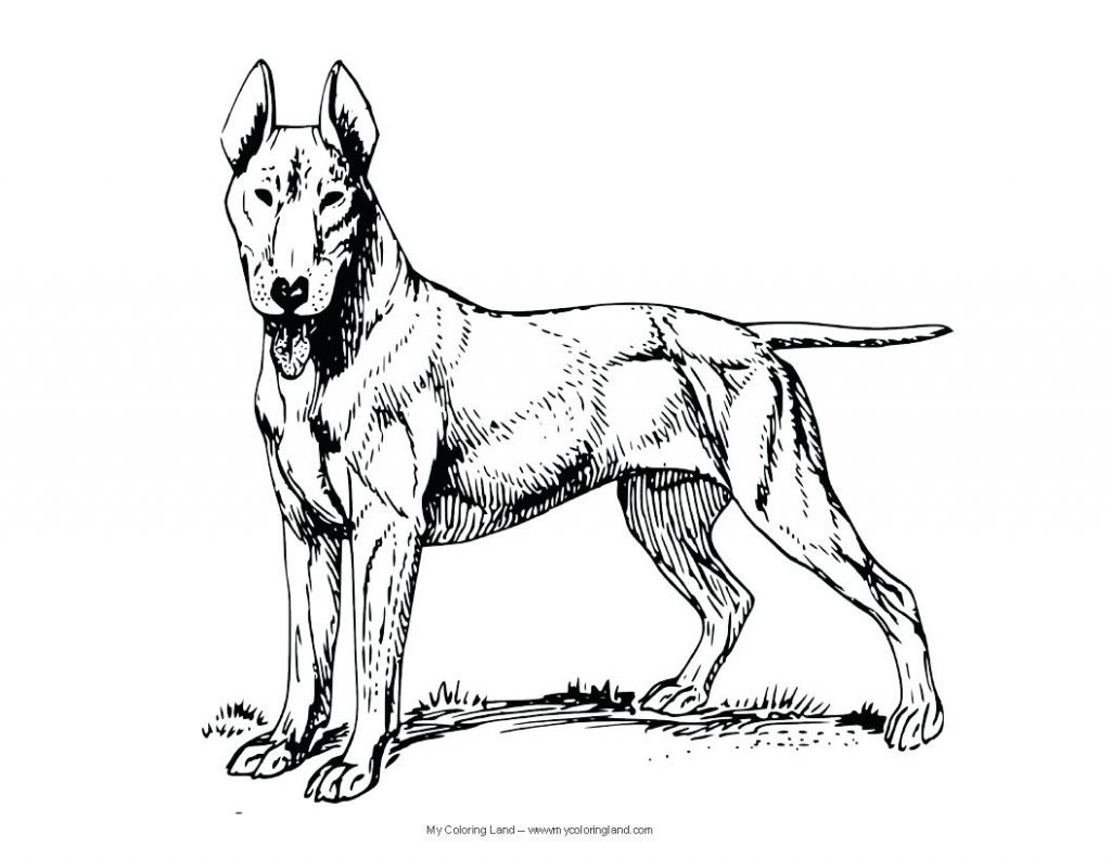 1024x791 Coloring Page Coloring Pages Dog Realistic For Kids And Cat