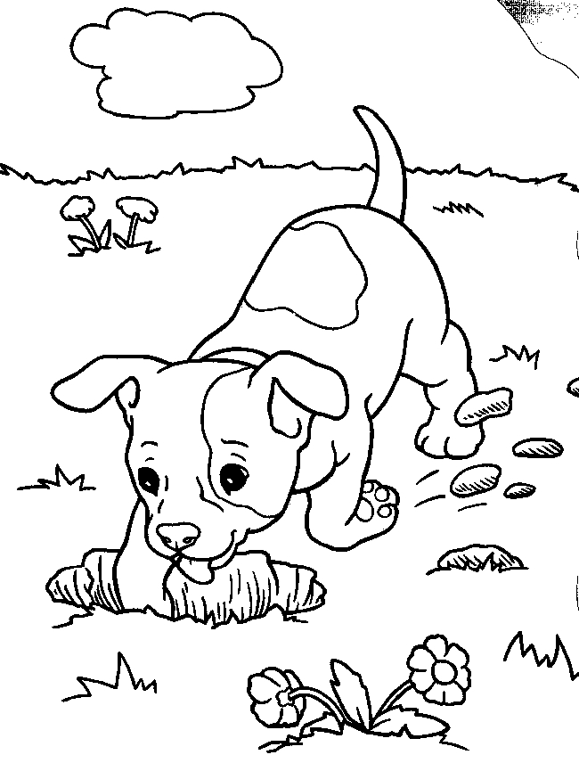650x856 Printable Realistic Dog Coloring Pages Real Dog Coloring