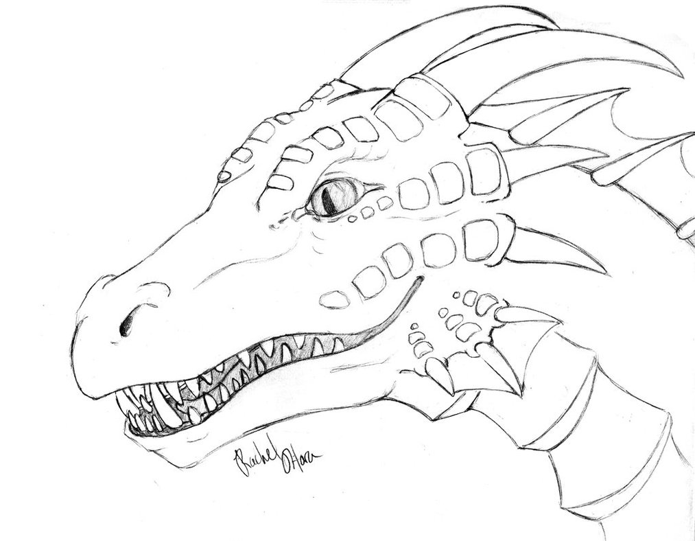 1013x788 Realistic Dragon Coloring Pages