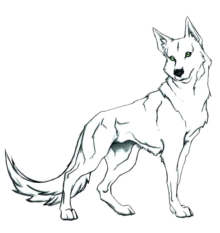 736x779 Wolf Pup Coloring Pages Wolves Coloring Page Realistic Wolf Pup
