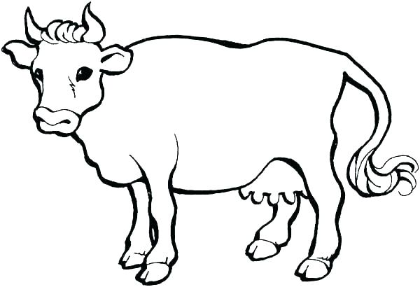 600x410 Cow Coloring Page Cow Coloring Pages Cow Color Page X Pixels