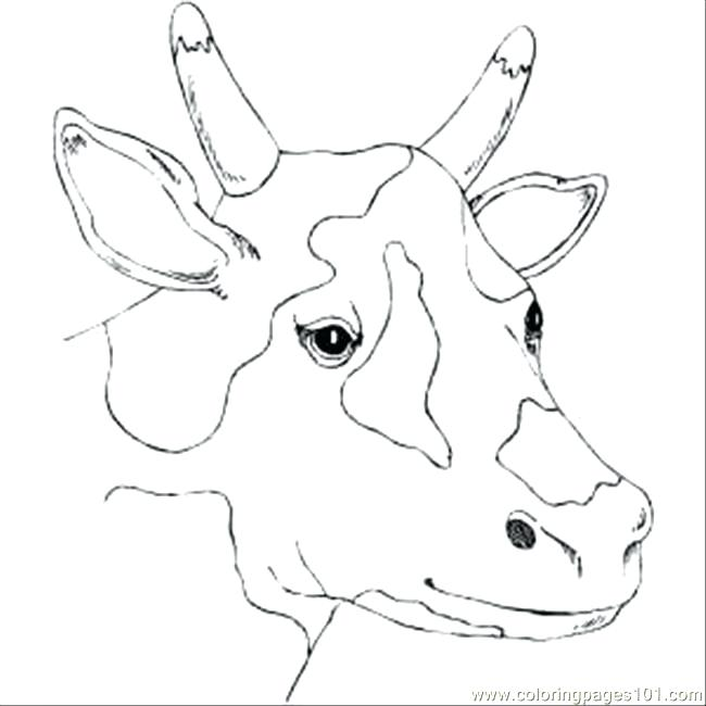 Realistic Cow Coloring Pages at GetDrawings com | Free for