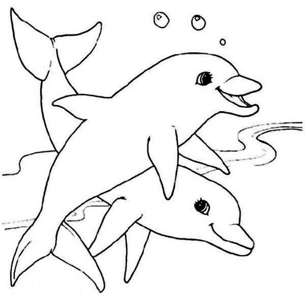 600x600 Two Cute Dolphin Sea Animals Coloring Page Two Cute Dolphin Sea