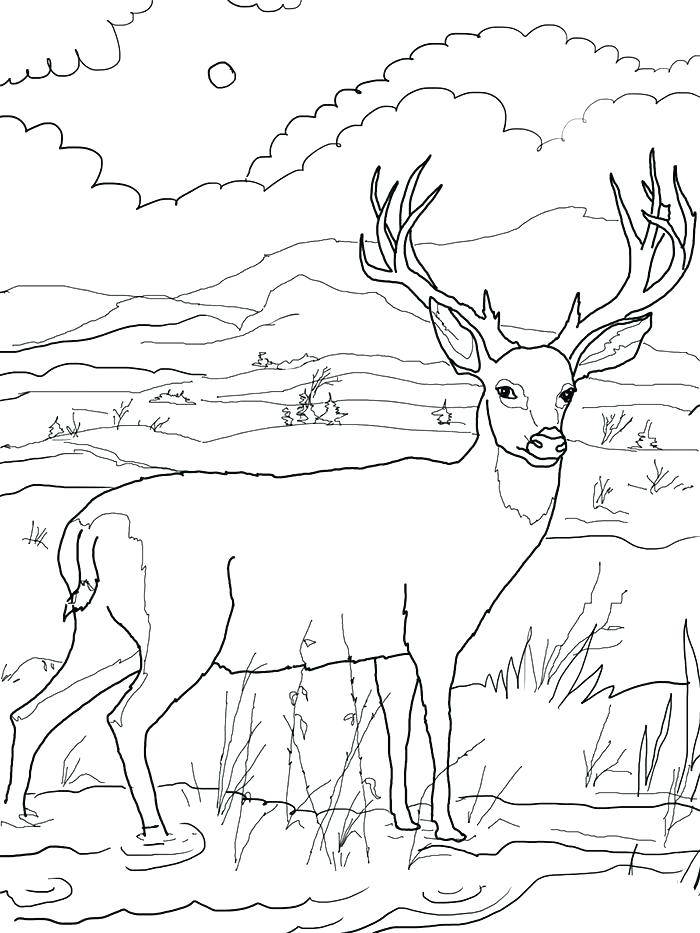 700x933 Free Deer Coloring Pages Whitetail Deer Coloring Pages Deer