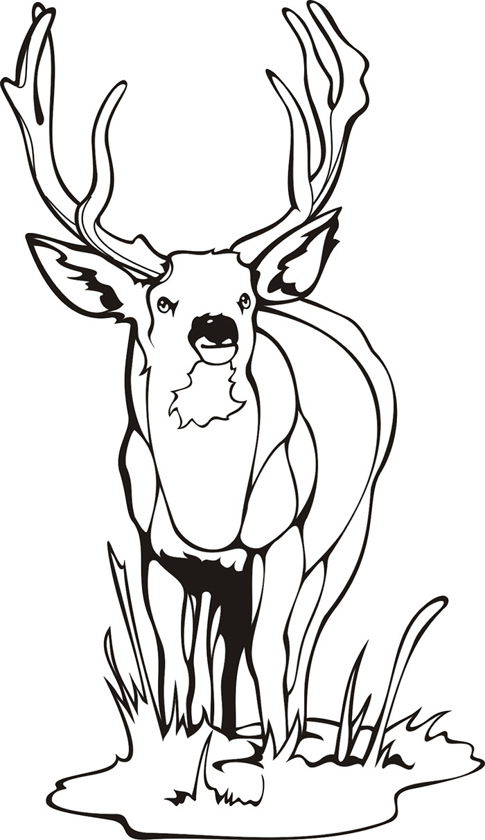 700x1212 White Tailed Deer Coloring Pages