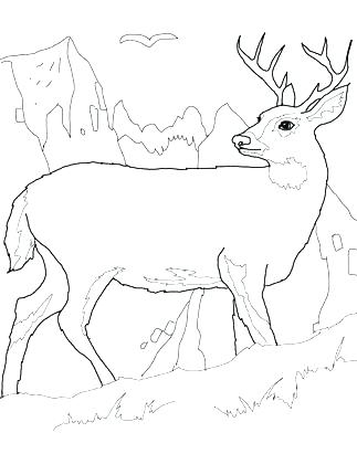 323x430 Whitetail Deer Coloring Pages Deer Coloring Pages Baby Deer