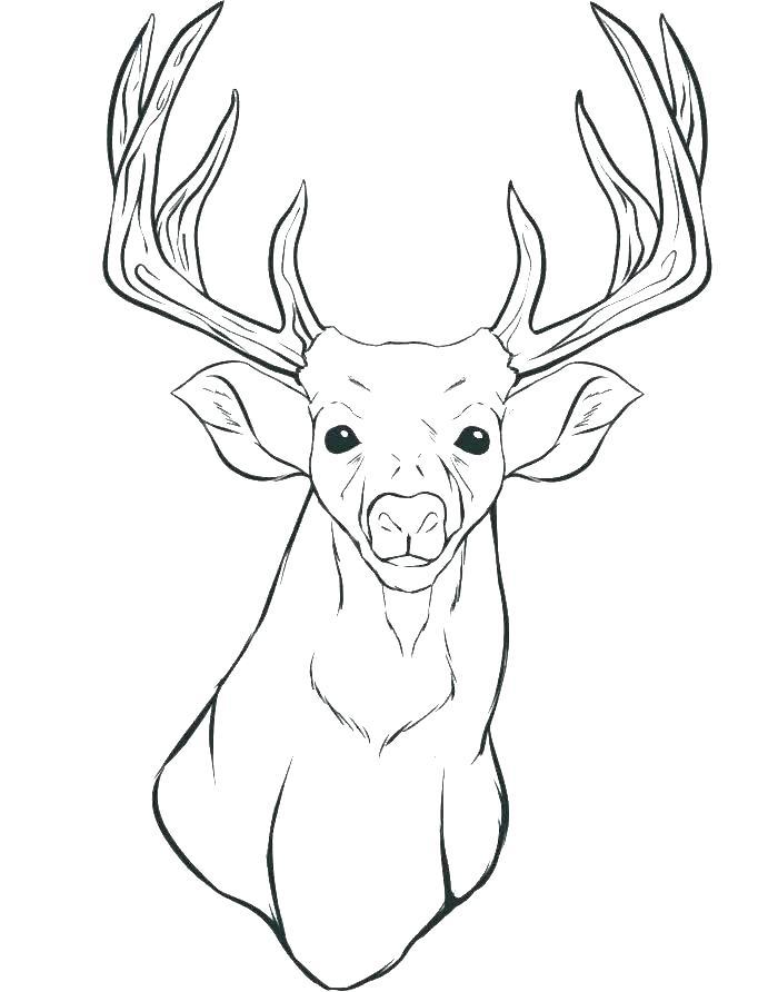 700x892 Whitetail Deer Coloring Pages Deer Realistic Whitetail Deer
