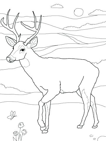 360x480 Whitetail Deer Coloring Pages Whitetail Deer Coloring Pages