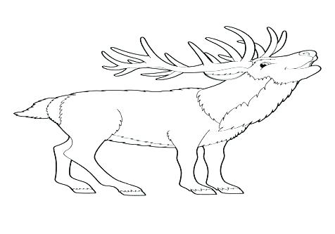476x333 Baby Deer Coloring Pages