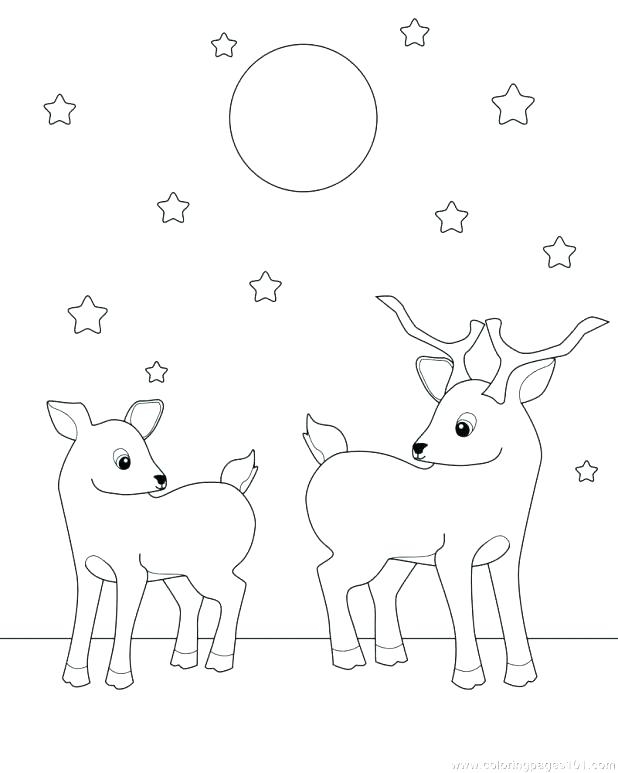 618x773 Whitetail Deer Coloring Pages