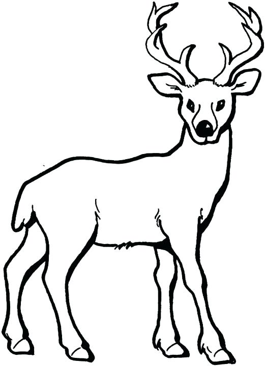 521x720 Deer Animal Coloring Pages Realistic Deer Coloring Pages Printable