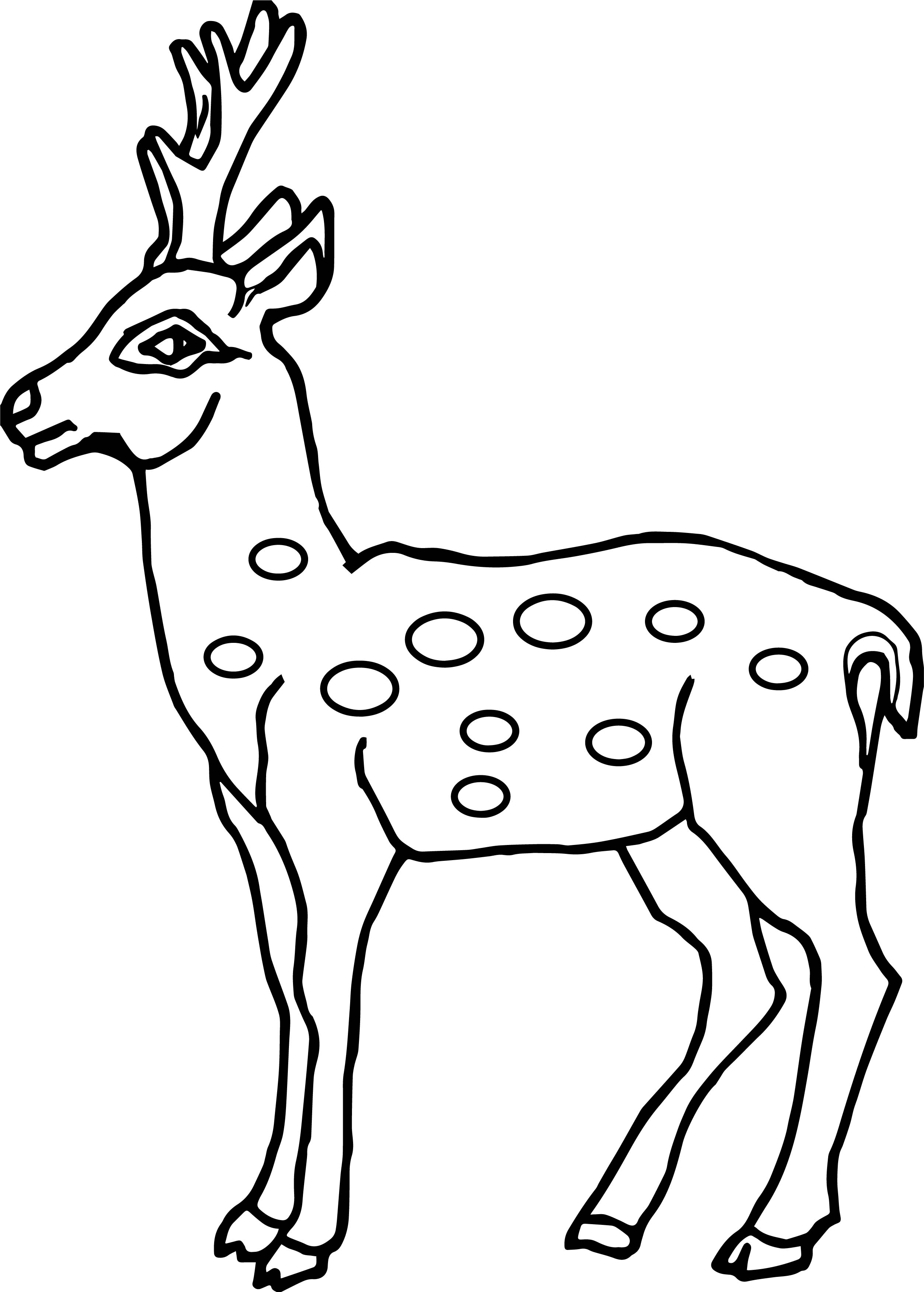 2507x3503 Deer Coloring Mule Pages