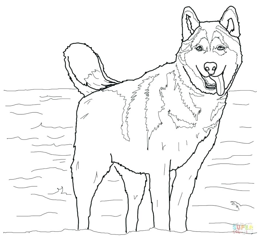 900x834 Dog Color Pages Free Coloring Pages Dog Free Printable Dog