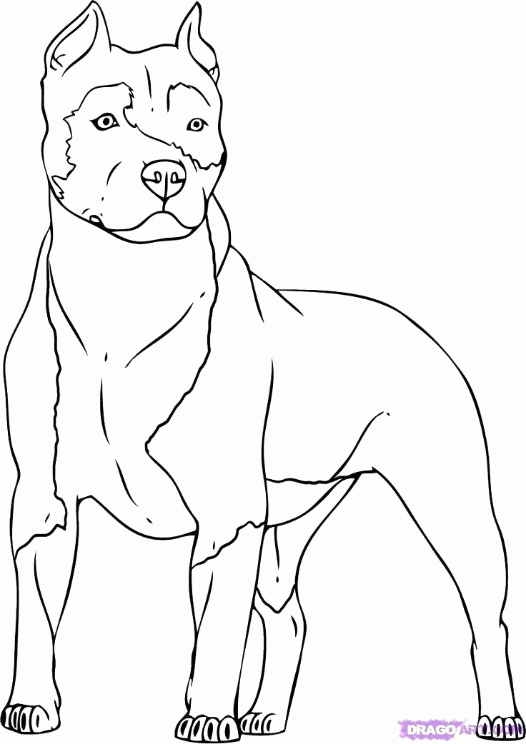 736x1042 Dog Coloring Pages Printable Dog Color Page Dog Coloring Pages