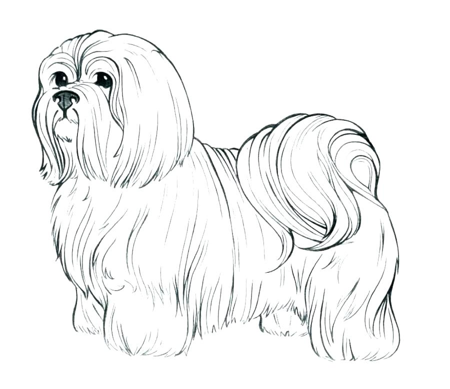 900x779 Realistic Coloring Pages Realistic Dog Coloring Pages Realistic