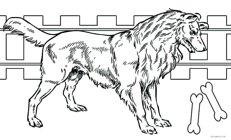 800x485 Realistic Dog Coloring Pages Puppy Coloring Page Realistic Dog