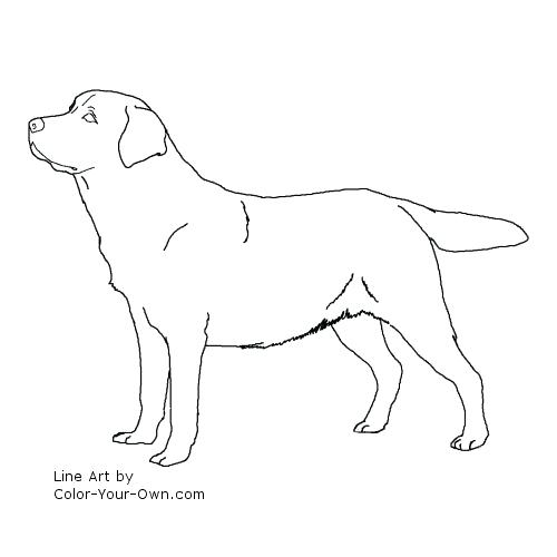 500x500 Coloring Pages Dog Dog Coloring Book Pages Coloring Pages Dogs