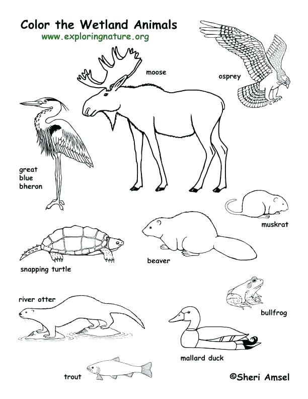 612x792 Forest Animals Coloring Pages Forest Animals Coloring Pages Forest