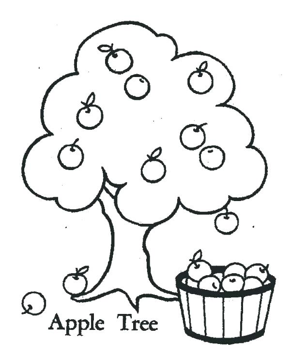 599x739 Apple Tree Coloring Page Apple Tree Coloring Page Realistic Apple