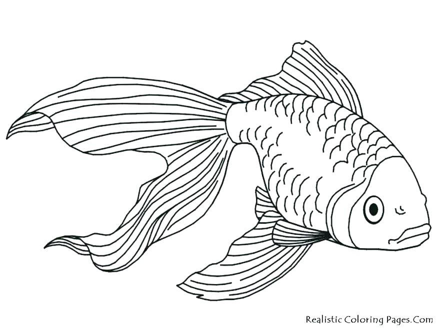 878x659 Realistic Coloring Pages Realistic Flower Coloring Pages Realistic