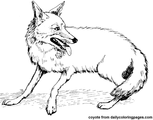 500x391 Coyotes Animal Coloring Pages