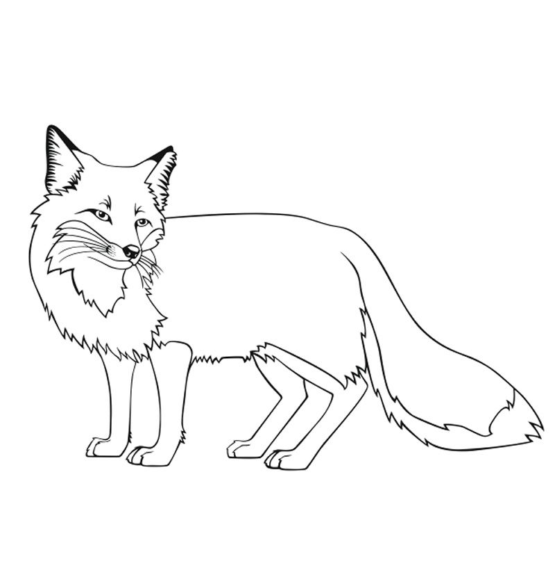 800x821 Fox Coloring Pages Free Printable Fun Time