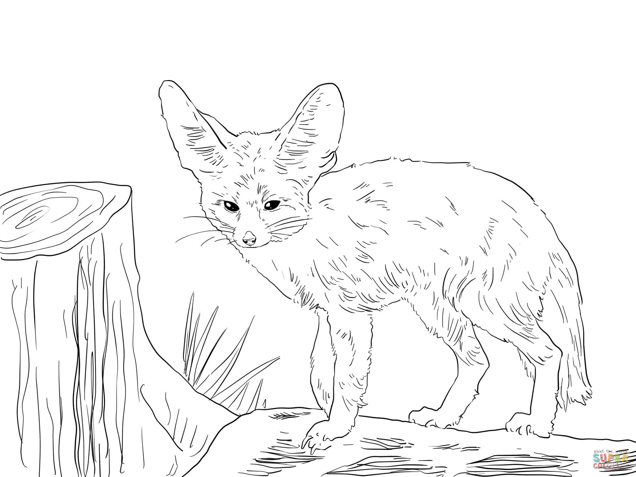 2048x1536 North Africa Fennec Fox Coloring Page Realistic Pages