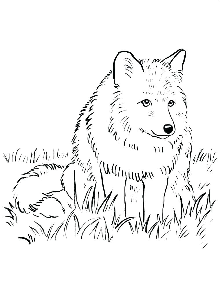 760x985 Realistic Adult Wolf Coloring Pages Free Printable Amazing Wolf