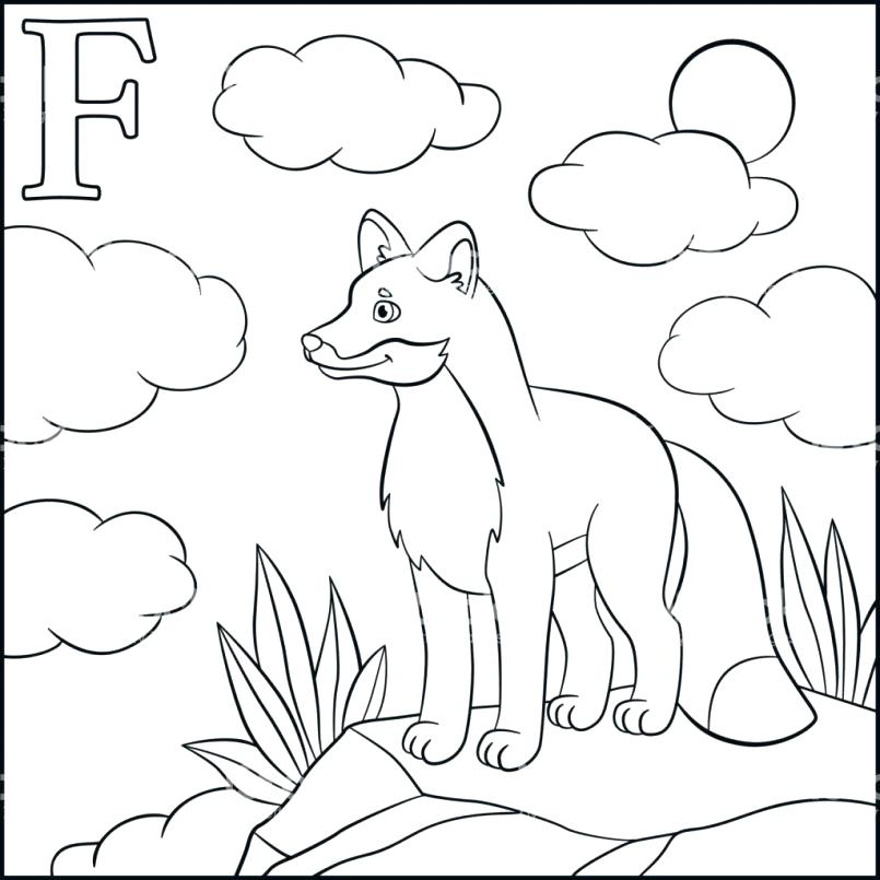 805x805 Realistic Fox Coloring Pages Plus For Teenage Girl With Cute Col