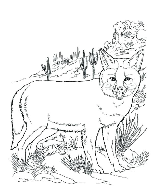 600x731 Animal Habitat Coloring Pages Realistic Coloring Pages Packed