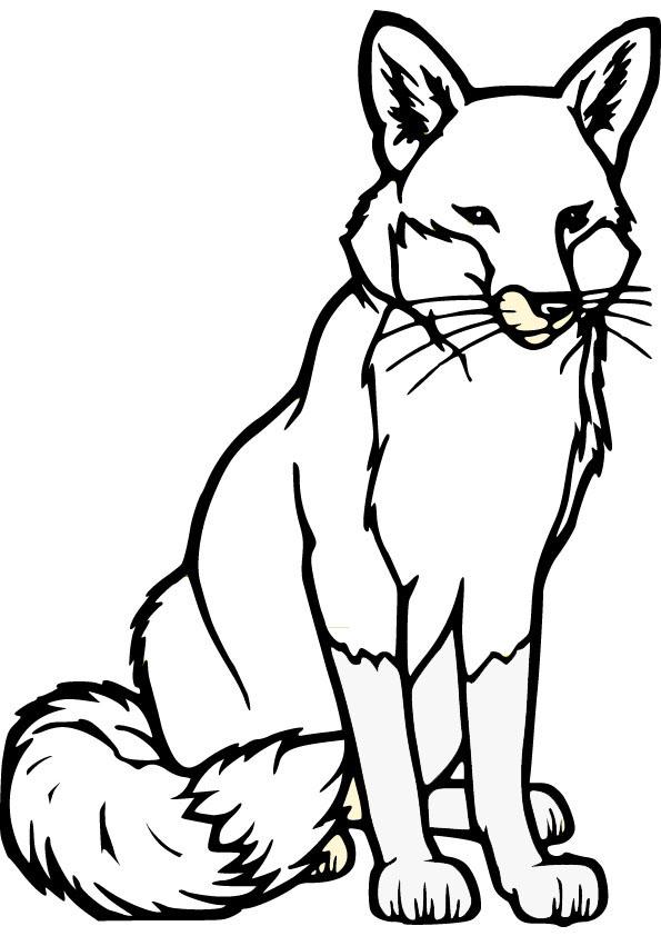 595x842 White Fox Drawing