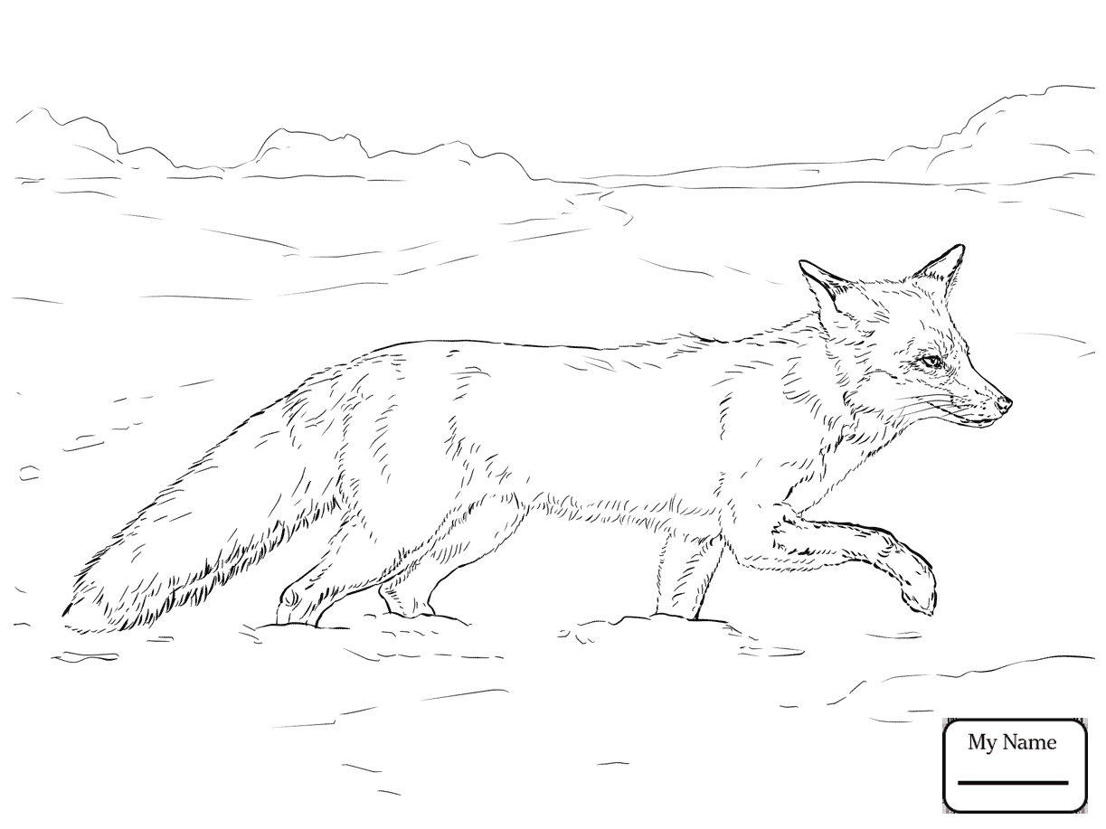 1223x917 Awesome Realistic Fox Coloring Pages Design Free Brilliant