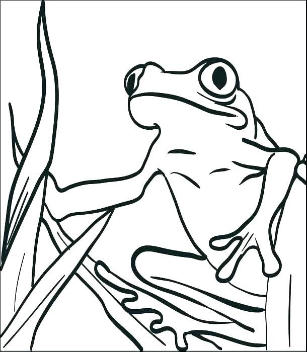 610x700 Free Frog Coloring Pages Coloring Page Of A Frog Free Frog