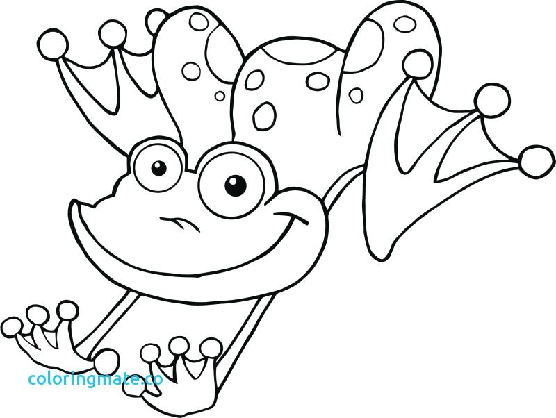 800x602 Frog Color Pages Cartoon Coloring Medium Size Realistic Frog