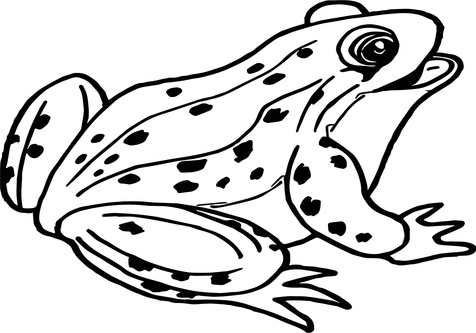 476x333 Frog Coloring Pages For Kids Coloringstar