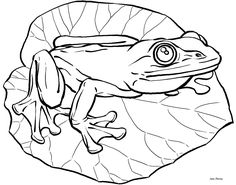 236x185 Frogs Coloring Pages Coloring Pages Frogs