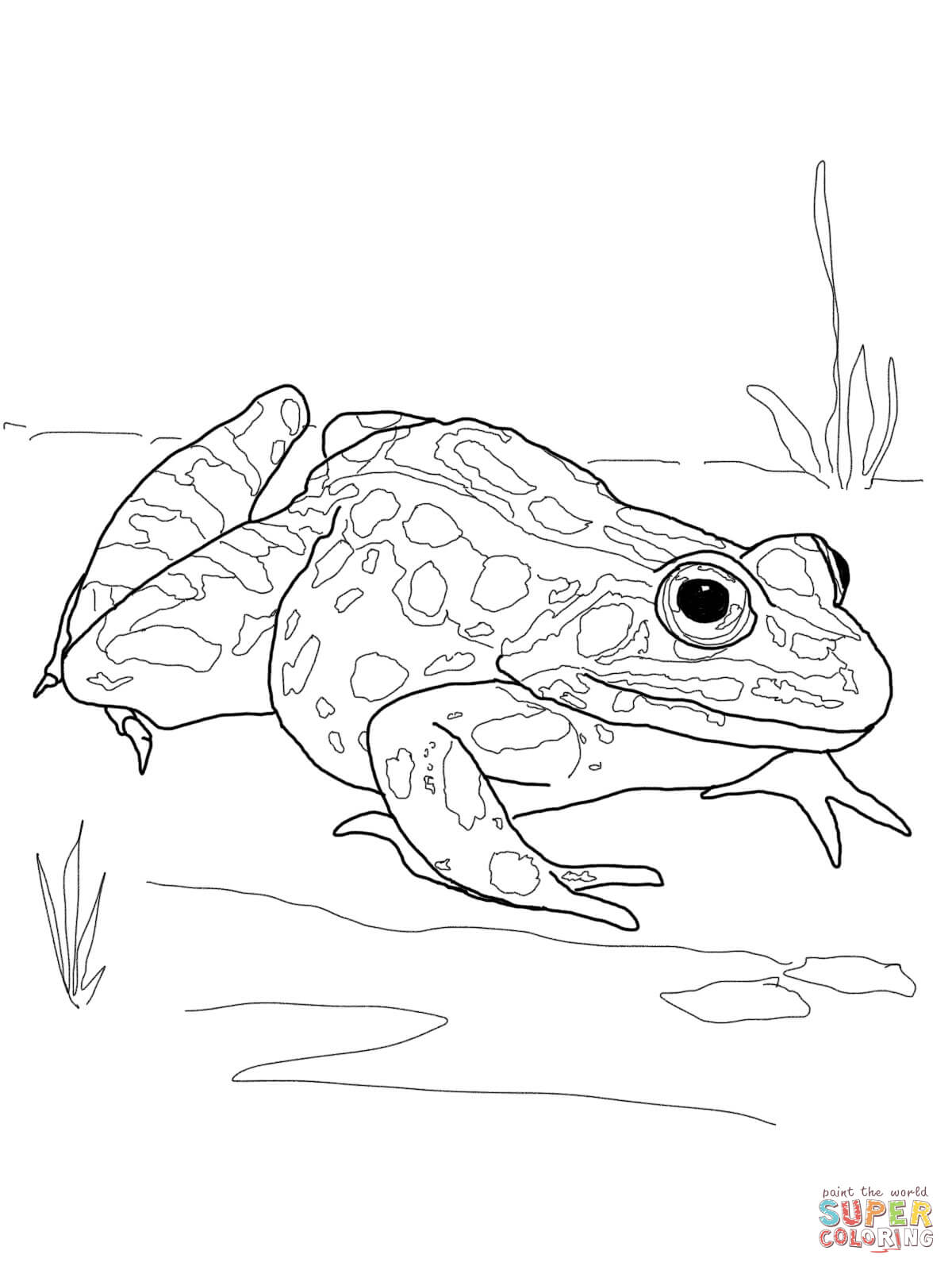 1200x1600 Pleasurable Free Printable Frog Coloring Pages Frogs Inside Jumper