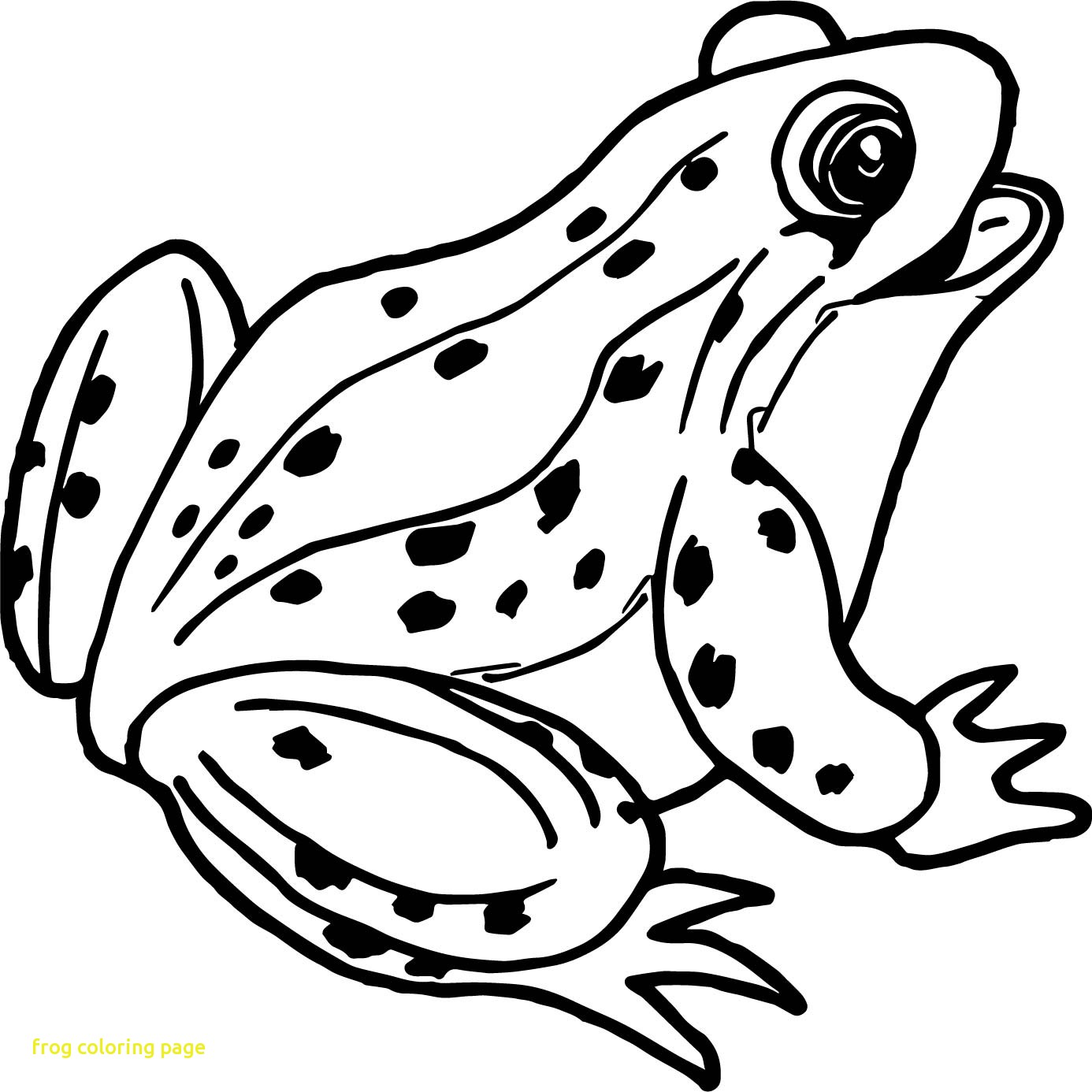 1386x1386 Spotlight Realistic Frog Coloring Pages Frogs
