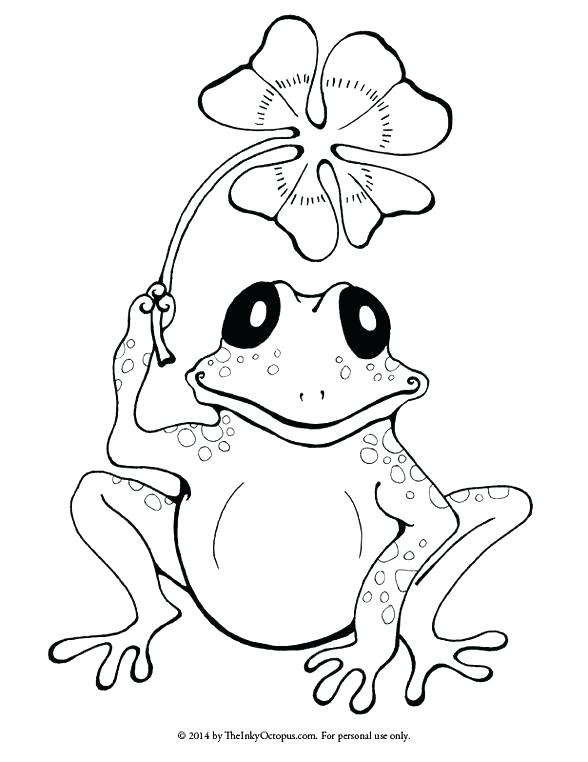 588x762 Coloring Pages Frogs Realistic Frog Coloring Pages Preschool
