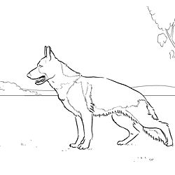 250x250 German Shepherd Dogs Coloring Page Free Printable Coloring Pages