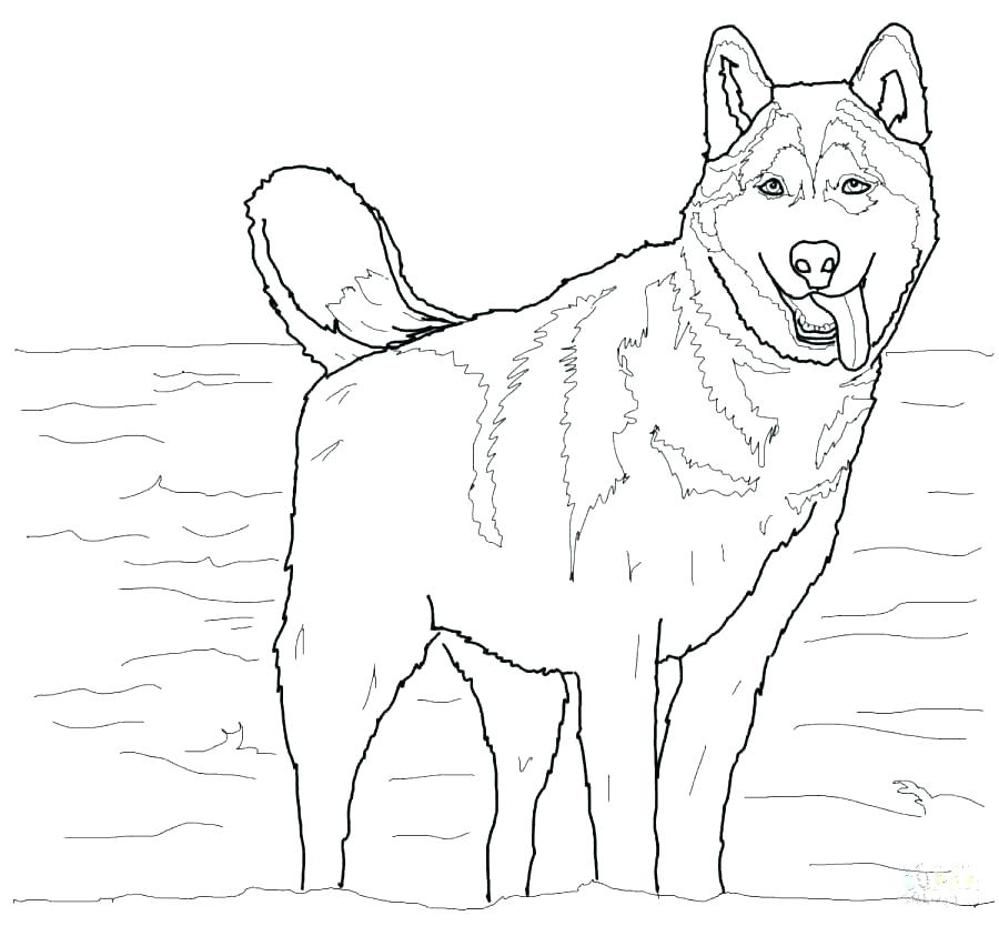 German Shepherd Coloring Pages - Coloringnori - Coloring Pages For Kids