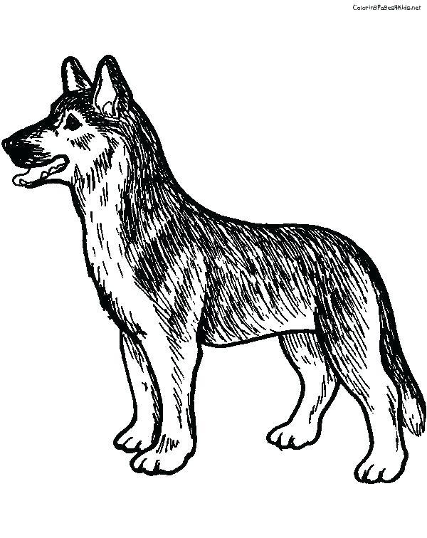 600x756 German Shepherd Coloring Page Drawn Shepherd Coloring Page Pencil